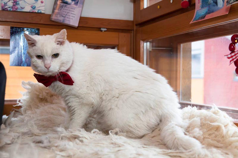 Suomen Vanhin Kissa