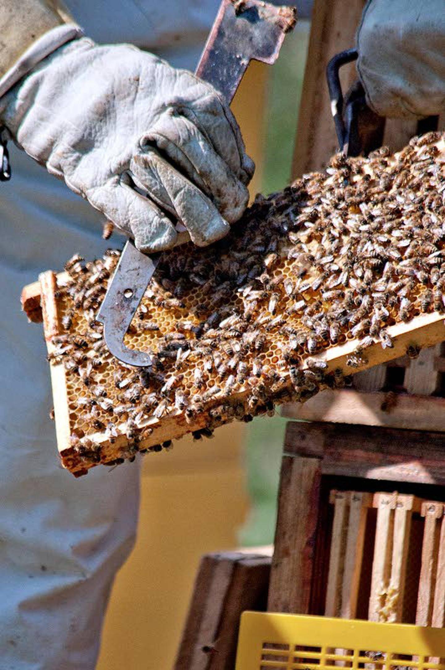 Mehiläisparvi