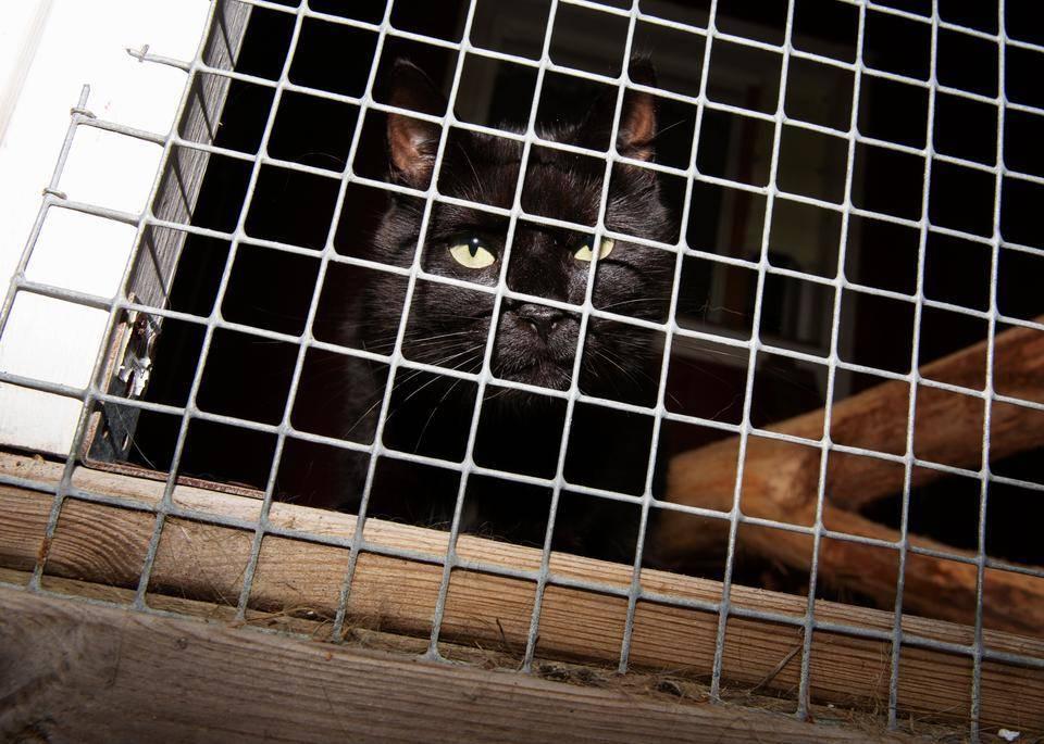 Päijät-Hämeen Eläinsuojeluyhdistys