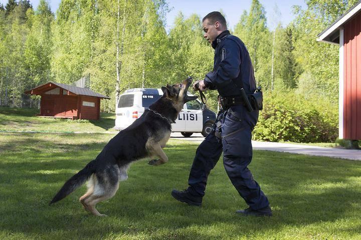 Koiranohjaaja